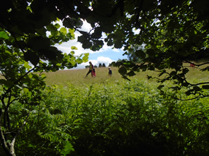 5th July 2016 Welly Walk to the Meadow (9)